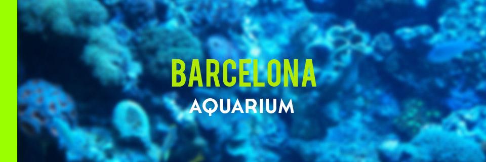 acvariu-barcelona