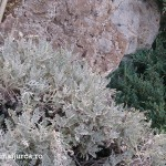 atena-grecia-lykabettus-29