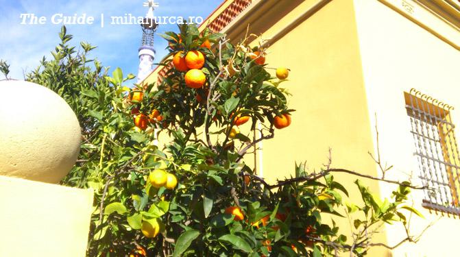 barcelona-portocale