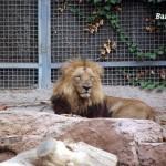 gradina-zoo-barcelona-1