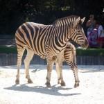 gradina-zoo-madrid-1