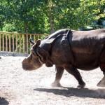 gradina-zoo-madrid-2