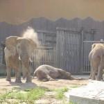 gradina-zoo-viena-5