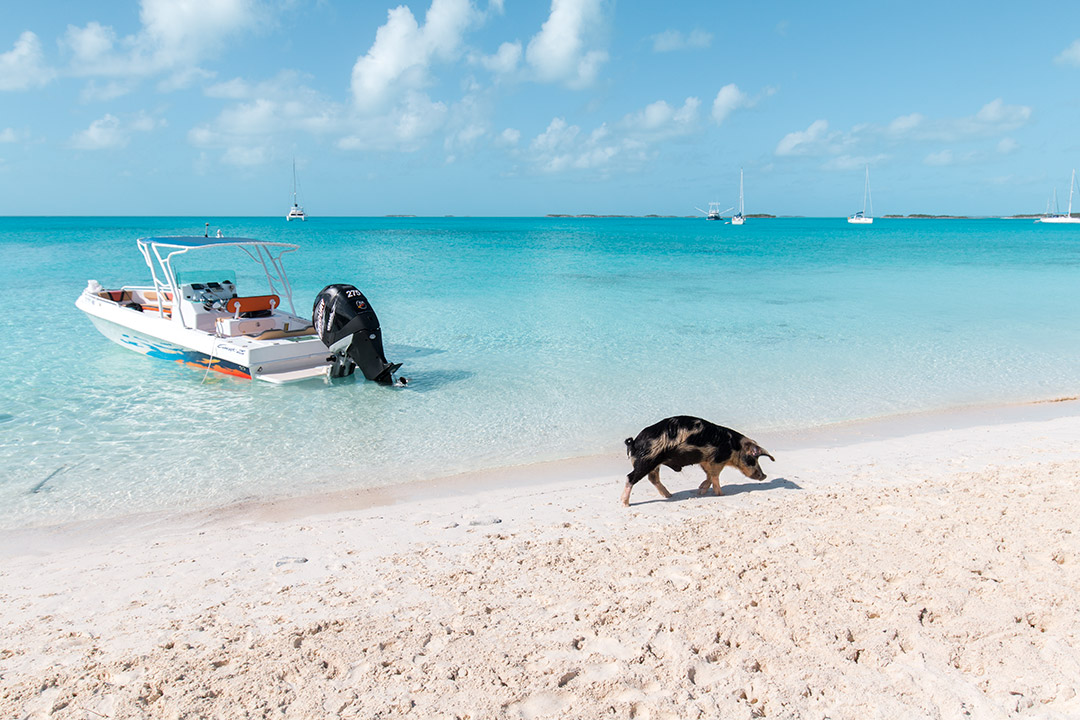 plaja-porci-exuma-bahamas-2