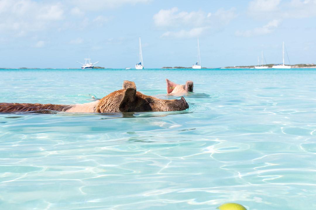 plaja-porci-exuma-bahamas-6