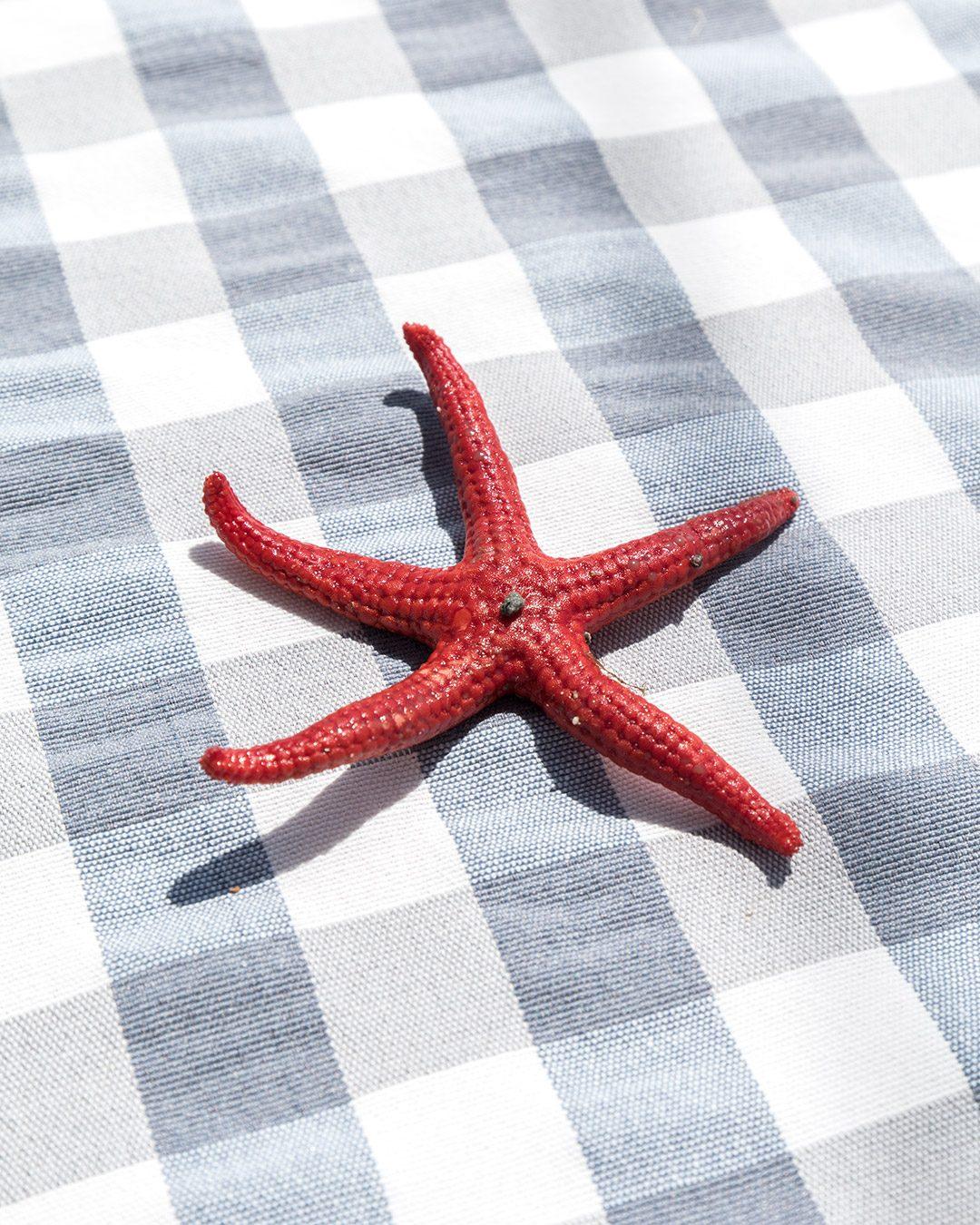 stea-mare