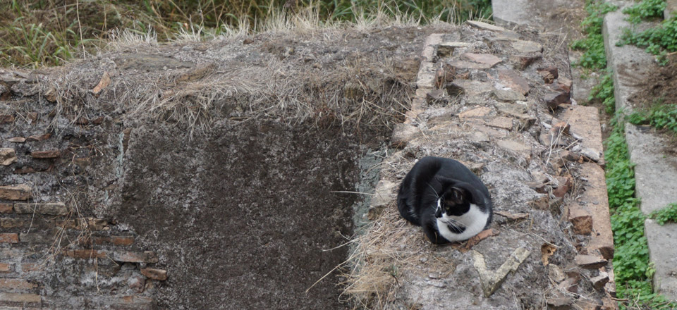 pisici-roma