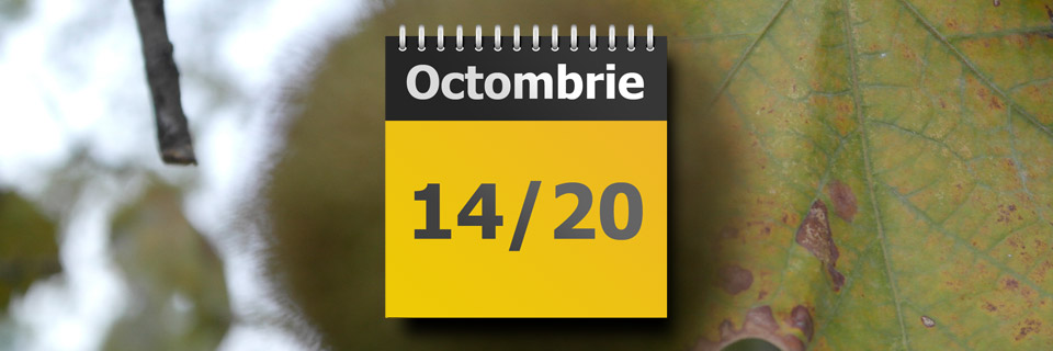prognoza-meteo-vreme-romica-jurca-45